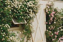 Gardening / by Caryl Leeds