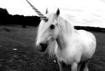Unicorns / by Jocelyn Lofton