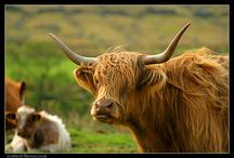 Scotland / by Kristy Dolezal Frame