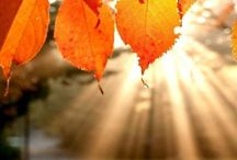 I love fall!!! I love fall! / by Dianna Upthagrove