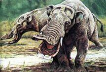 Prehistoric / by Sharon Pribble