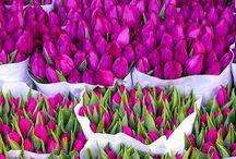 I <3 Flowers / by Tiffany de Heus