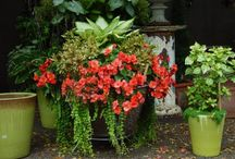 Flower Pots and Containers / by Melanie Williams