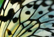 butterfly wings / by Cheryl Matthews