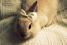 Thumper / by Deane Bostic
