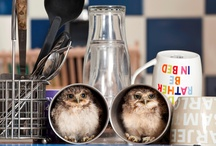 Twit-twoo / we're a bit owl-crazy at Myakka - let us know on facebook, if you'd like to join in the fun and we'll send you an invite :) / by Myakka Ltd