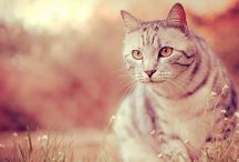 Cats / by Solène Raidron