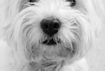 perros / by monica perez