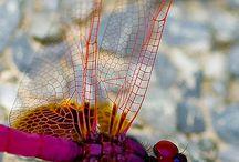 Dragonflies / by Rhonda