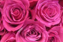 Pink / by Rebekah Culver