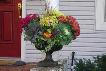 Fall gardening / by Kim Walker Taylor
