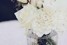 Wedding / by Molly Heilman