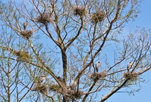 Wildest Bird Nest Contest / Reader submissions of wild, beautiful and artistic bird nests. / by Joan Morris