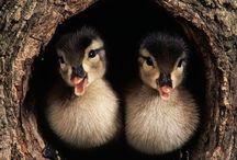 Birds/Just Ducky / by Debbie Beals