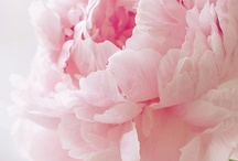 Fleurs / by Lynne & Gail