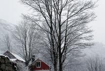 Winter Wonderland / by Gayle Bryan