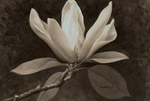 4-Art-flowers / by Natalia Clarke