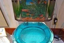 Fish Tanks / by Rachel Prince