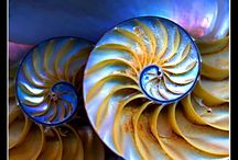 Spirals / by Karen Glasgow