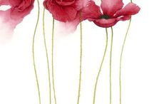 Watercolors  / by Deb Harwell