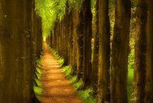 Trees / by Wendy Fernandez