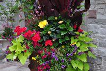 Flowers & Planters / by Barbara Hoikka