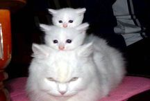 Cats & Kittens MEOW / by Terri K. Douglas