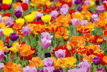 Color / by Linda Jo Park