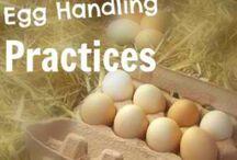 Eggs / by Sherry Baumann