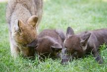 Animals / by Busch Gardens