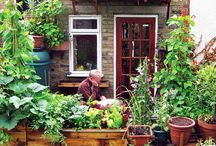 garden / by Colette Self