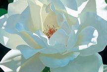 Fleurs  / by Emilie Aubertin