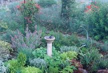 herb garden / by Mary Hobson