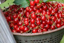Red Cherries / by Marty Howe