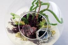 Gardens/Terrariums / Gardening, landscape / by Alicia Vance Design