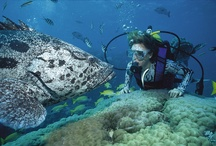 Scuba Diving Hotspots / The top diving destinations around the world you need to see for yourself to believe. / by Flight Centre Canada