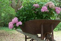 Gardening / by Kristy Keith