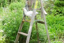 chickens / by Melaine Bennett Thompson