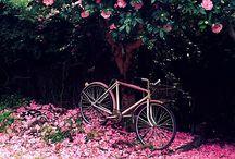 Garden & Outdoor / by Ayse