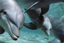 Dolphins / by Jennifer Lind