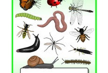Bugs & Minibeasts Free Teaching Resources / Free printables for your Bugs/Minibeasts topic. / by SparkleBox