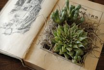 Indoor Botanicals / Bringing the outdoors, indoors. / by Laura Lee