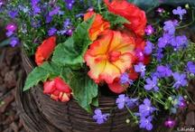 Gardening / by Kristin DiPerri