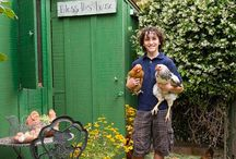 Chicks & Their Coops / by Tina Beatty