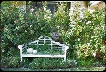 Gardens / by Sandra Jensen