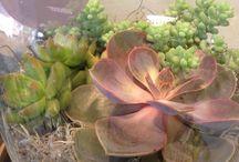 Plantastic! / by Maggie Lim