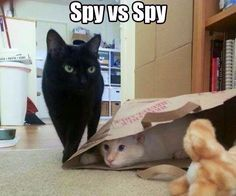 Cat spies