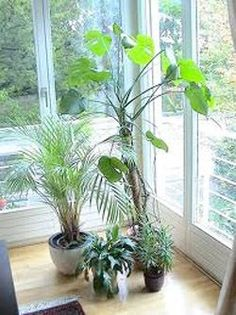 Best air purifying house plants!