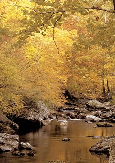 Love the Great Smoky Mountains
