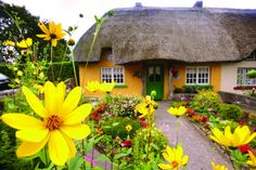County Clare Cottage - a typically Irish, cosy, thatched cottage within blooming countryside. What else is there to see and do in the Irish West? http://tourireland.com/blog/?article=70